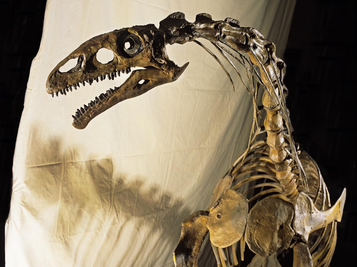 Plateosaure Stefan Ansermet Musée cantonal de géologie