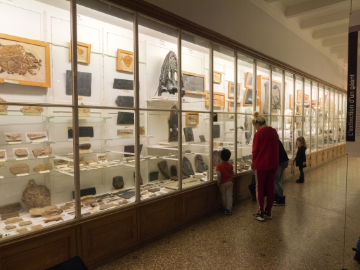 Salle Philippe de la Harpe La grande vitrine dédiée aux fossiles de vertébrés est longue de 35 mètres Michel Krafft Musée cantonal de géologie