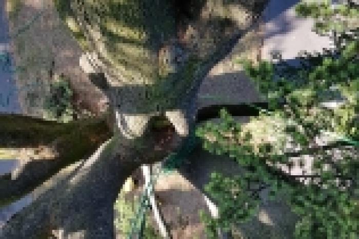 L'arbre vu de l'intérieur