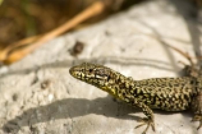 A la découverte des reptiles