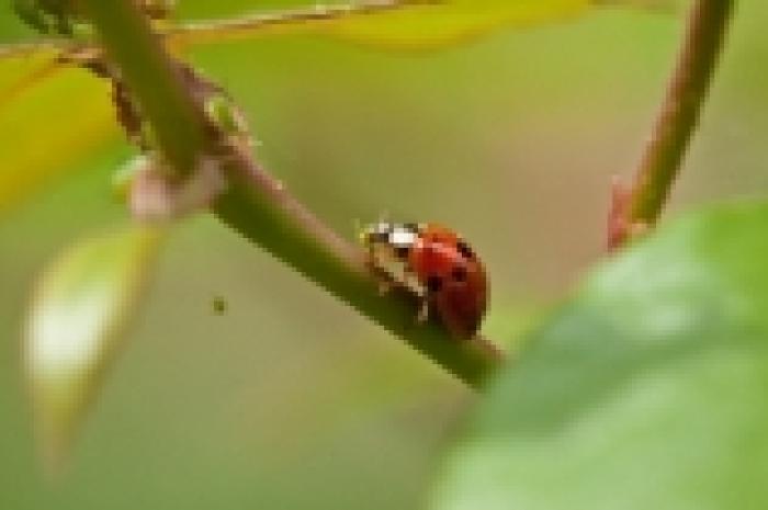 L'entomofaune des lisières