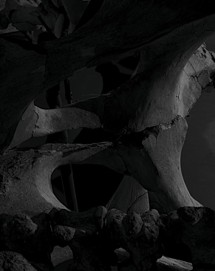 """Sans titre Yann Mingard chapitre """"Mammoth"""", Collection de paléontologie systématique, Musée cantonale de géologie, Lausanne, Suisse, 2017."""