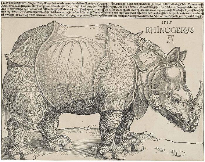Rhinocéros de Dürer, 1515 Albrecht Dürer