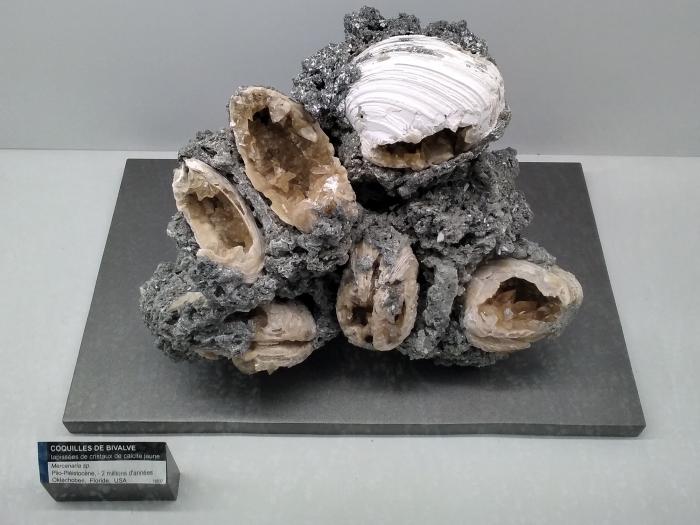 Fossiles ou minéraux ? Manuel Riond © Musée cantonal de géologie, Lausanne, 2021